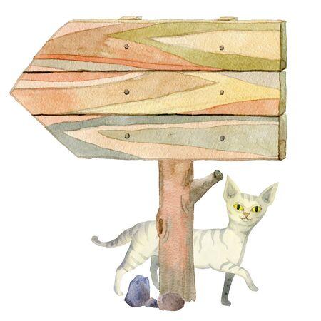 White striped cat