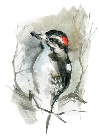Woodpecker sitting on a branch