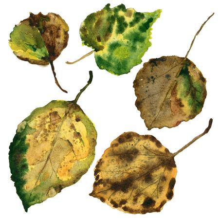 Autumn leave aspen