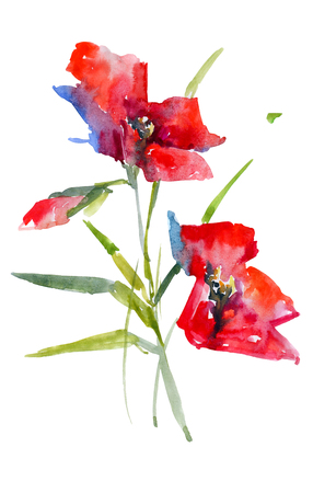 Red poppies watercolor sketch. Isolated from background picture 版權商用圖片 - 117706006