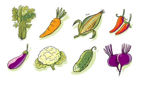 A set of isolated vegetables from the farm.