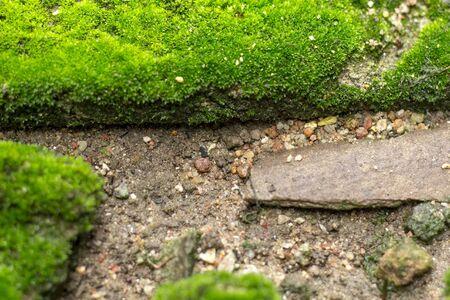 ou: mos plant ou ground Stock Photo