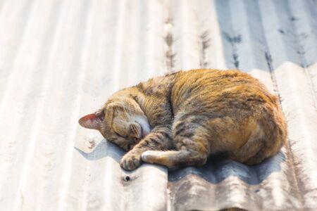 catnap: Cat Sleep on roof Stock Photo