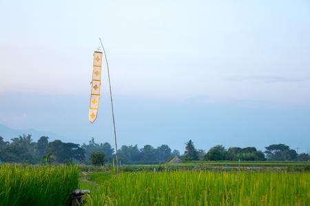 Chiang Mai Thailand Flag on rice farm Banco de Imagens