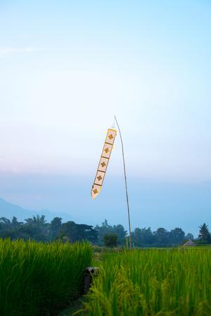 Lanna Thailand Flag on rice farm