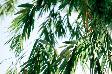 bamboo leaf on blue sky Stok Fotoğraf