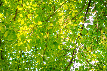 Natural placeful concept leaf tree with warm sunlight.