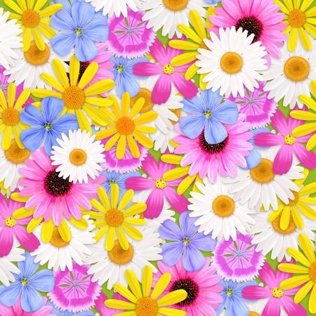 shasta daisy: Wildflowers background, illustration
