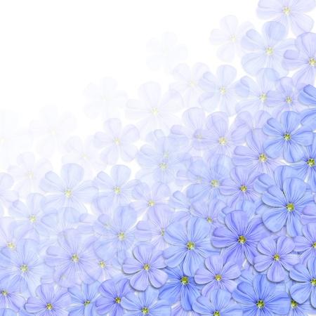 flax: Wildflowers background, illustration