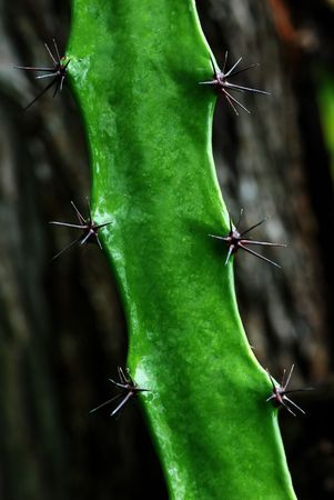 A desert plant on rainy day: a cactus stem with three spine clusters on each side.