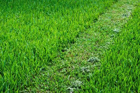 A green lawn with a stripe of cutted lane running diagonally through the picture. 版權商用圖片