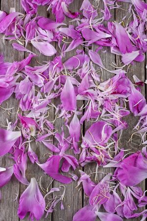 Scattered petals of flowers on an old wooden background.  Stok Fotoğraf