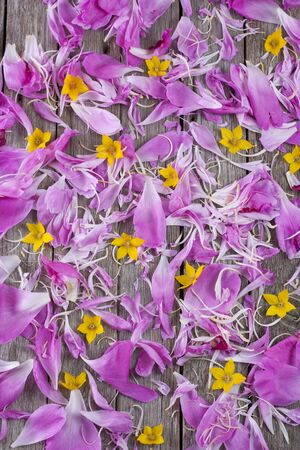 Scattered petals and flowers on an old wooden background.
