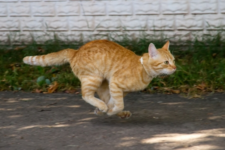 Red cat running down the street photo