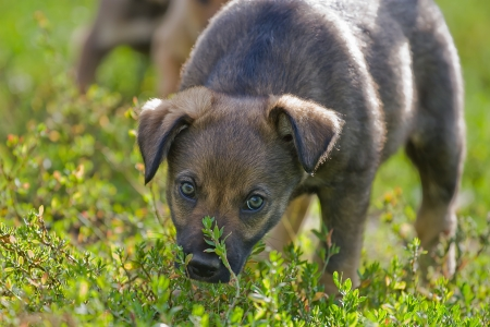 inexperienced: Inexperienced puppy on the green grass