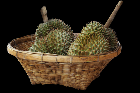 Durians in the basket and black background Stock Photo