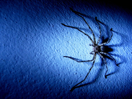 noxious: Spider on the wall in blue tone