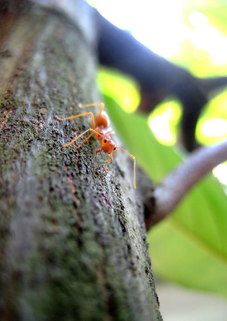 light duty: An ant on the tree