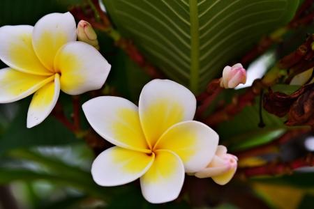 flower Stock Photo - 18124412
