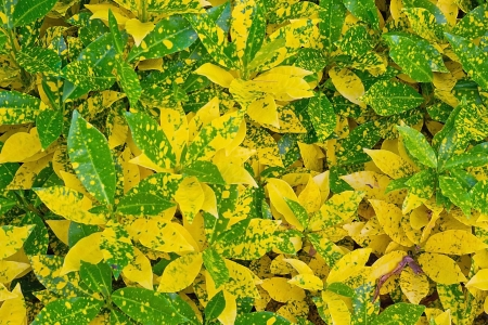 Leaves yellow, green texture photo