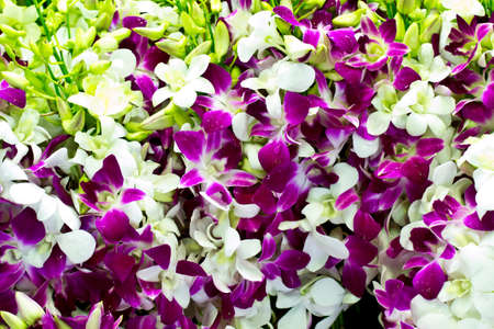 bouquet of dendrobium pompadour orchids in flower market thailand photo