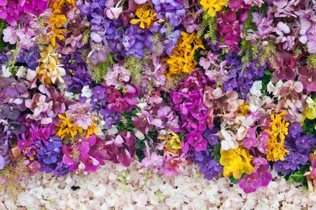 colorfu: Colorfu orchid Stock Photo