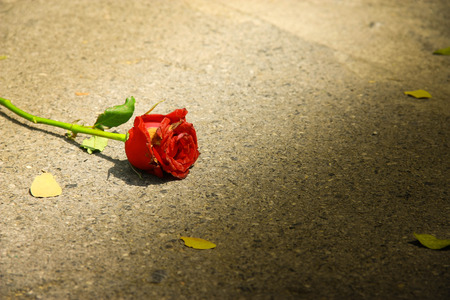 love hurts: a withered red rose was left on the street, alone