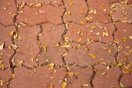 hojas secas: Descuido de cemento pisos bloque lleno de hojas secas