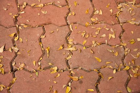 neglect: Neglect cement block flooring filled with dry leaves