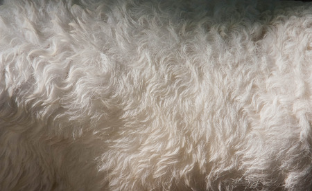 warm things: White and brown wool sheep fur texture as background
