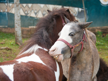 Image of two horses in love