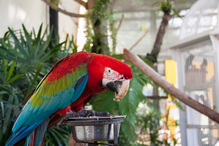 Macaw Parrot is eating