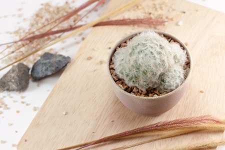 a small cactus in a pot on wood plank background with pebbles stone and dry grass.