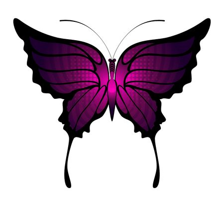 Tropical butterfly are isolated