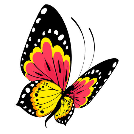 Tropical butterflies are isolated