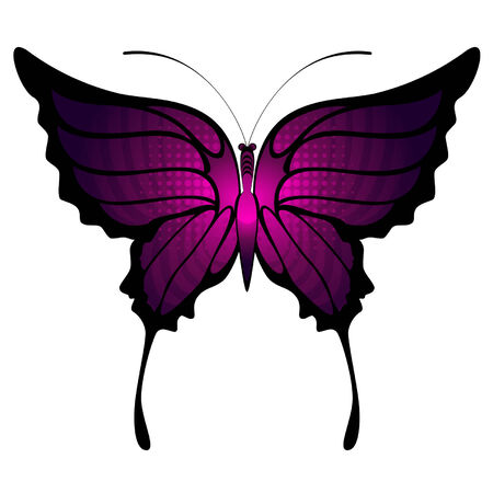 purple butterfly: Tropical butterflies are isolated