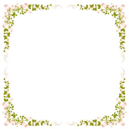 yedra: hermosos Ramos de rosas  Vectores