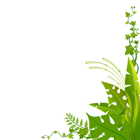 tropical climate: Beautiful background with tropical plants