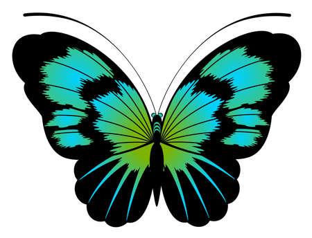 purple butterfly: Beautiful butterfly