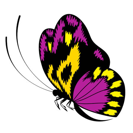 Tropical butterfly are isolated on a white background.vector Stock Vector - 8343597