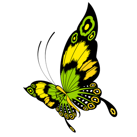 Tropical butterfly are isolated on a white background.vector Vector