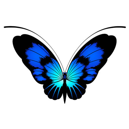 Tropical butterfly are isolated on a white background.vector Stock Vector - 8343589