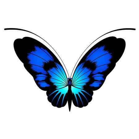 Les papillons tropicaux sont isolées sur un blanc background.vector