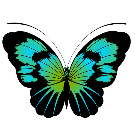 Tropical butterfly are isolated on a white background.vector Stock Vector - 8343591