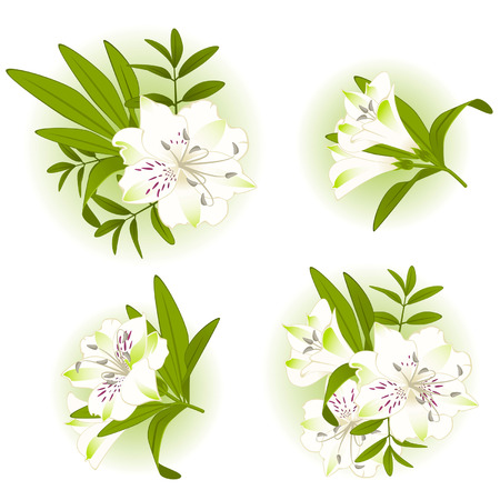 botanics: Beautiful Lily design element