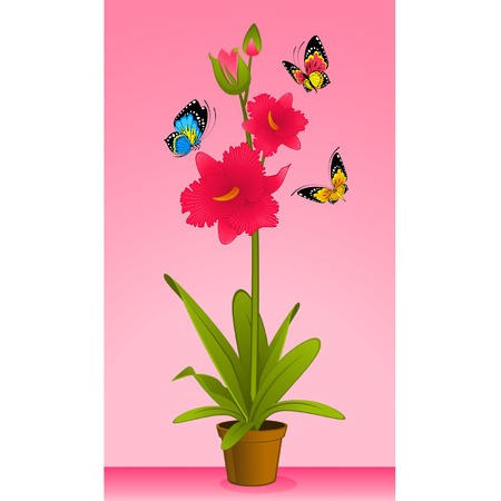 beautiful orchid in flowerpot Vector
