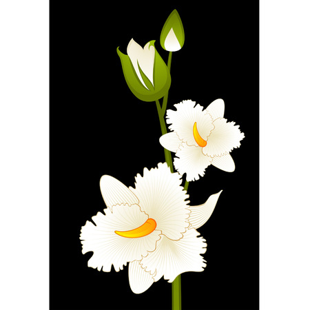 taffy: Beautiful orchid on the background