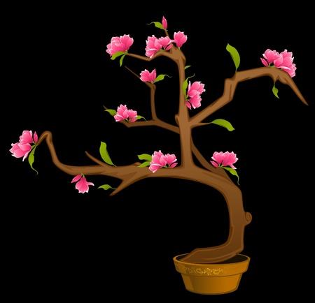 Beautiful bonsai with flowers photo
