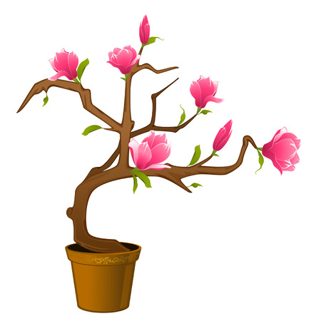 Beautiful bonsai with flowers Stock Vector - 9092626