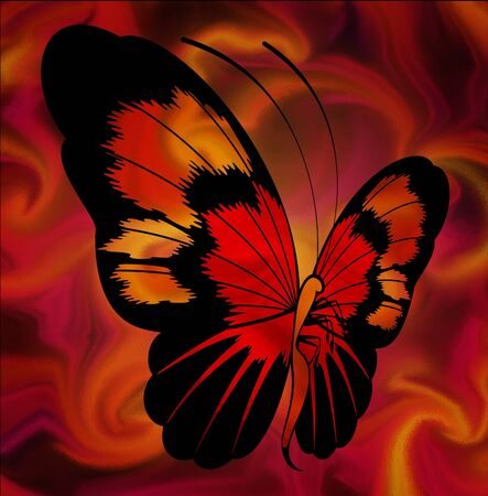 Beautiful background with tropical butterfly photo